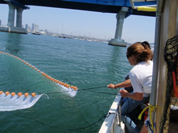 Purse seining for fish in San Diego Bay